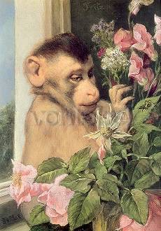 Ape with Flowers at the Window