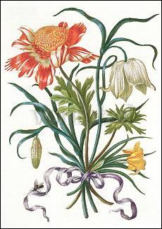 Illustration from: New Book of Flowers